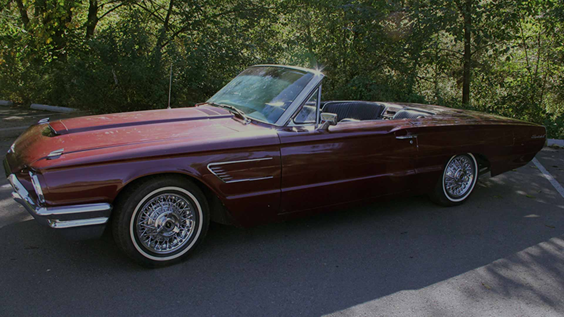 65 Thunderbird Convertible Bird Nest